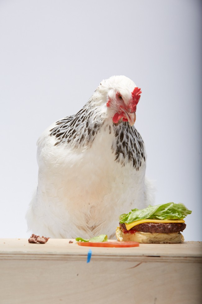 Adweek_Chicken_Burger_385