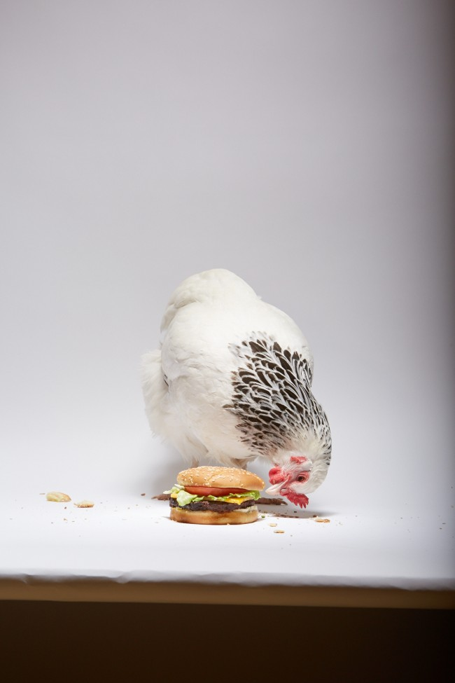 Adweek_Chicken_Burger_461