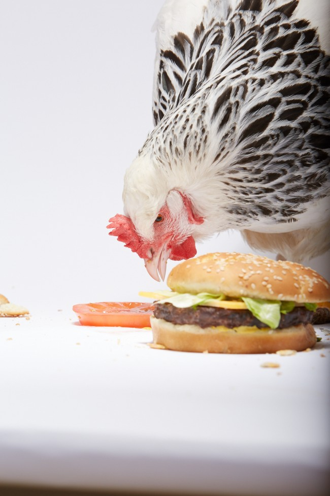 Adweek_Chicken_Burger_493