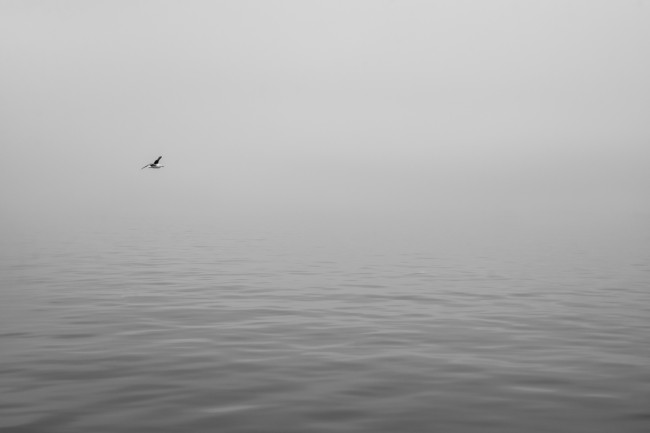 This was during a boat trip in large bay on Namibia's coast. It was very misty, with only 50 meters or so of visibility. I loved the calmness of the water in the bay and waited for ages for a bird to fly into the frame to break the pattern a bit.