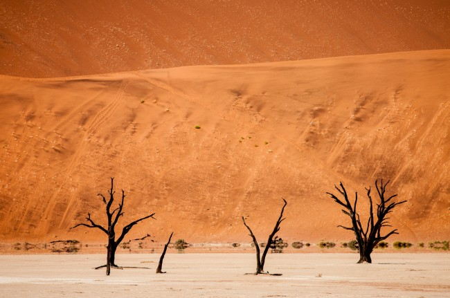 This was taken at a place called Dead Vlei, in the Namib desert in Namibia. The dead trees in front of the huge red sand dunes (the highest dunes in the world) made for a number of very surreal looking images.