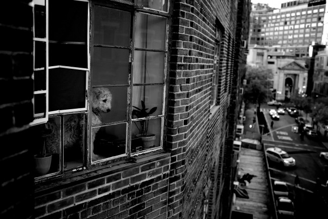 I told you I took pictures of my dog. — this was the first time she paid attention to her friends barking across the street. I guess it is a good example that I always have a camera close by.