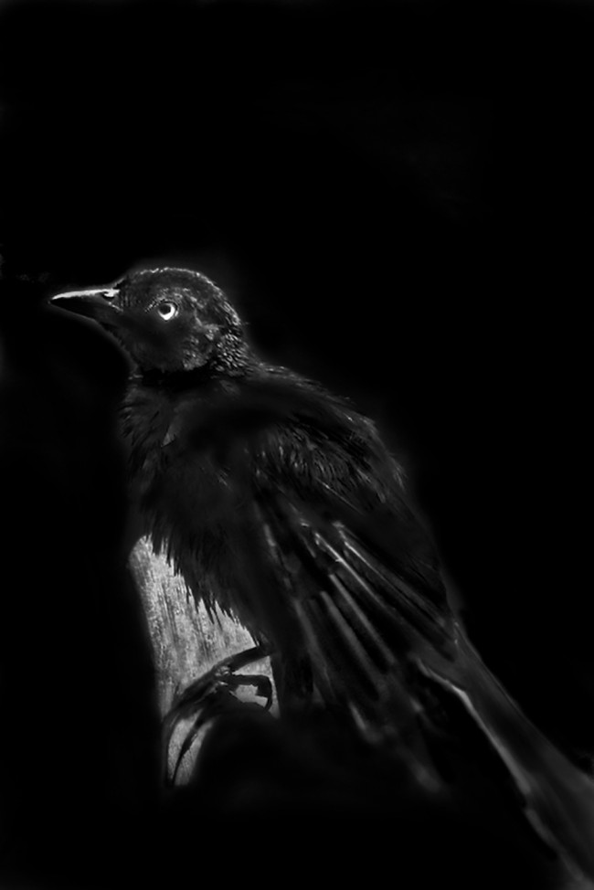 A black bird perched on a tree outside a window appears as if from a dream in this black and white photo portrait taken in Orlando, Florida.