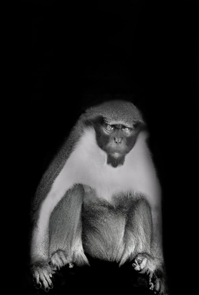 2008_12_26_Elder_Primate_Wisdom