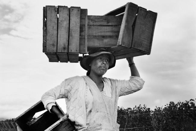 Portraits-Of-The-Harvest-Heffernan11