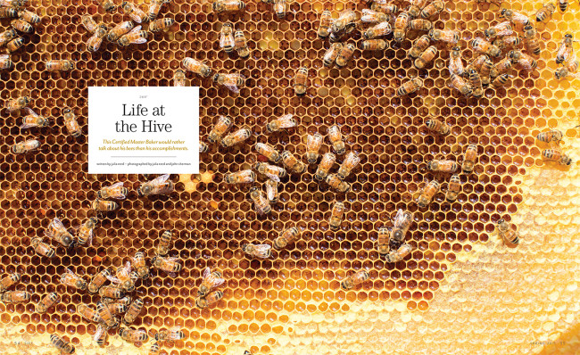 SIFT-life-at-the-hive