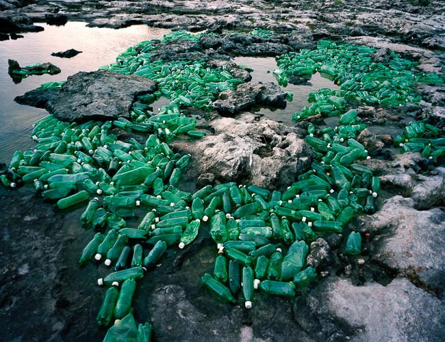 Algas (Algae) 2013