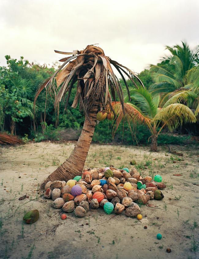 Cocos (Coconuts) 2011