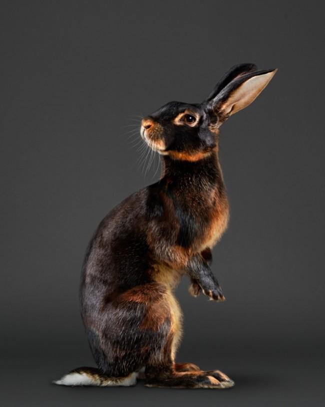 PeterSamuels.animals.fairy-tale.photographer.Ca-17