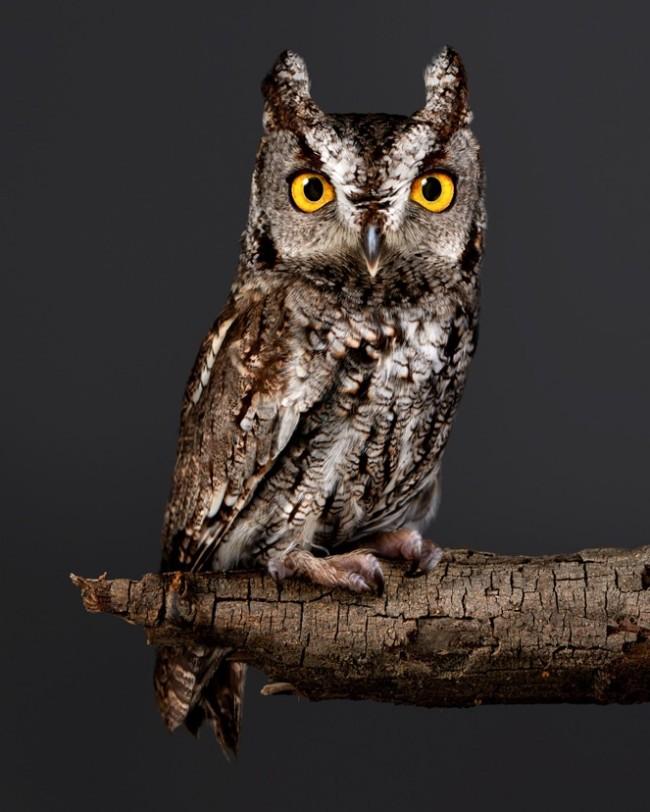PeterSamuels.animals.fairy-tale.photographer.Ca-20