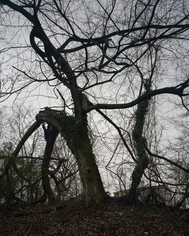 Tree on Hill 001