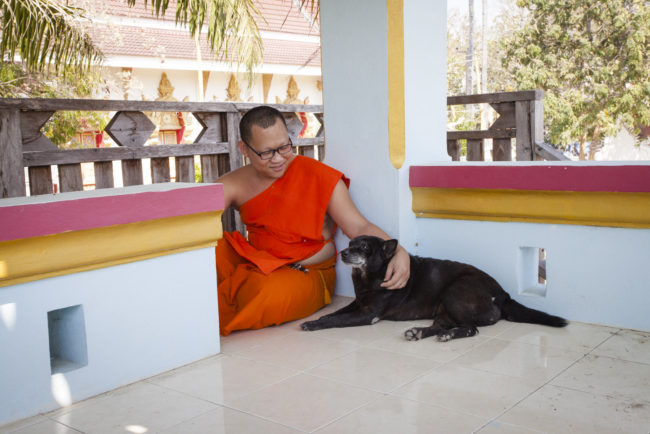 Nin is the last surviving dog at the Wat Ban Oi temple. Recently there was a mass poisoning of 20 dogs here, but Nin was spared. She's been at this Temple for 10 years. She is 12 years old. Pictured with Luang Poh
