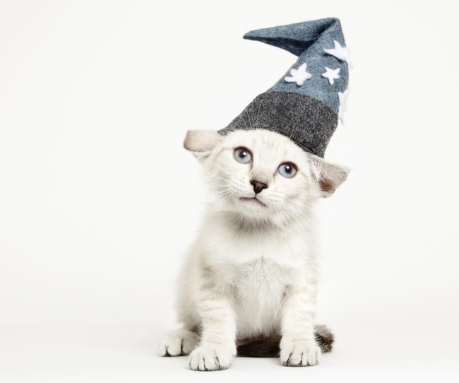 151024-CatsInHats-433a