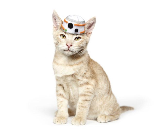 160109-CatsinHats-048a