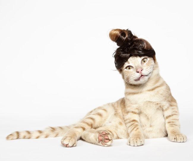 160109-CatsinHats-178a