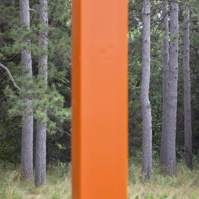 edaniel_forrest-trees