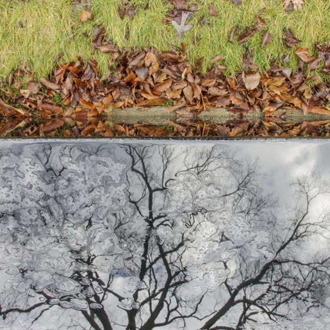 edaniel_landscape