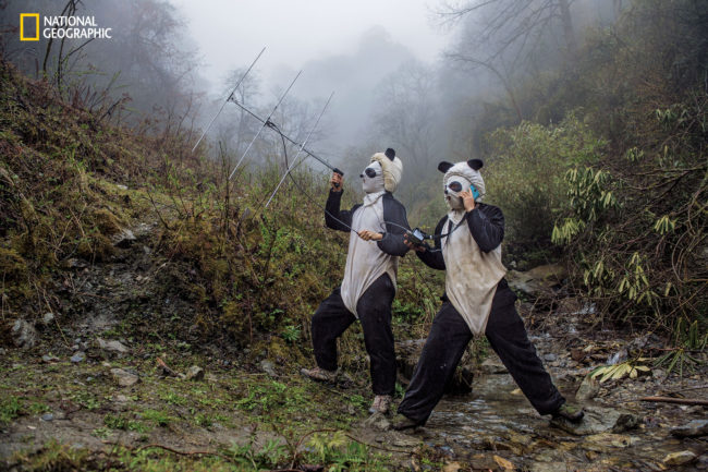 Photograph by Ami Vitale In a large forested enclosure of the Wolong Reserve, panda keepers Ma Li and Liu Xiaoqiang listen for radio signals from a collared panda training to be released to the wild. Tracking can tell them how the cub is faring in the rougher terrain up the mountain.