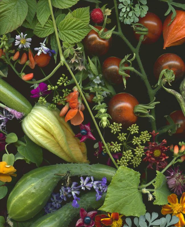 09_summer_harvest