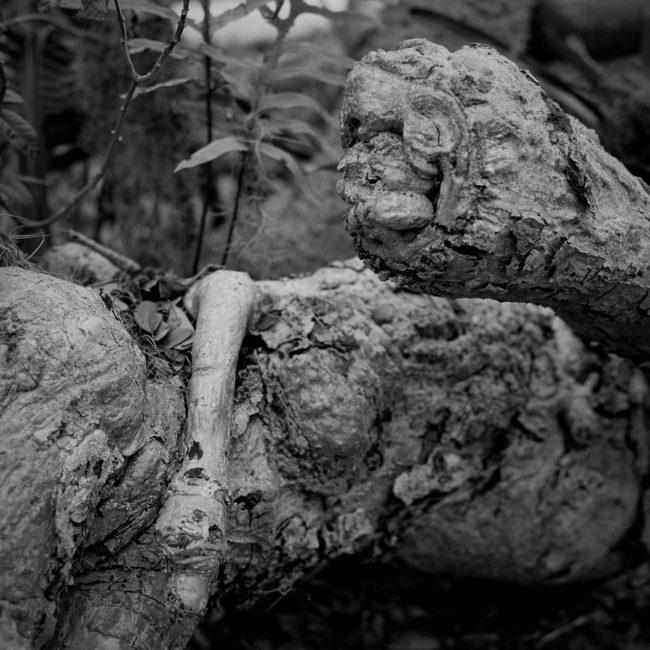 graves_james_mediumreview_13