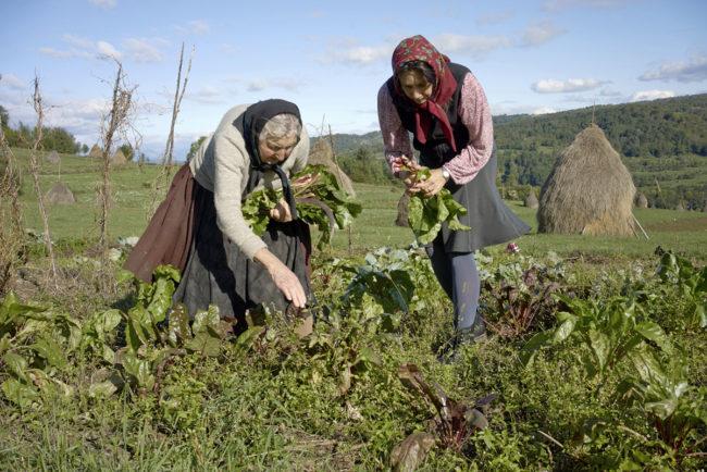 matyas_romania_gathering-produce