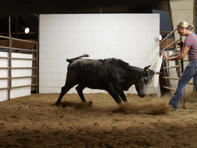 cow20-355-1